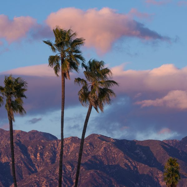 Vibrant background during a rare crisp, breezy afternoon in Pasadena, California. Showing the San Gabriel Mountains in the background